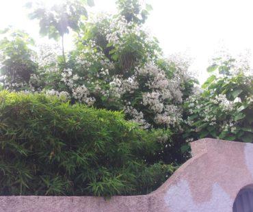 Mantenimiento de jardín exterior
