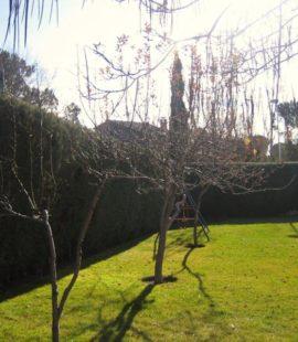 Mantenimiento de jardin exterior y poda de arizonica