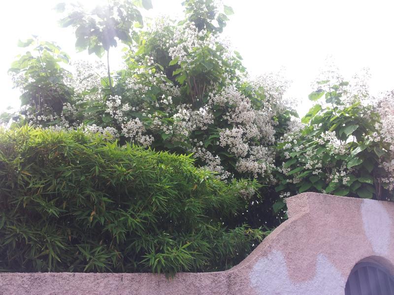 Empresa de jardiner a y mantenimiento de jard nes en madrid for Mantenimiento de jardines
